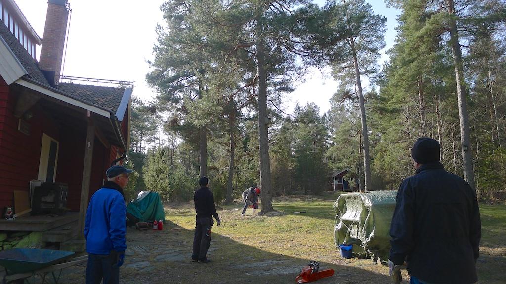 Trädfällning150315 10