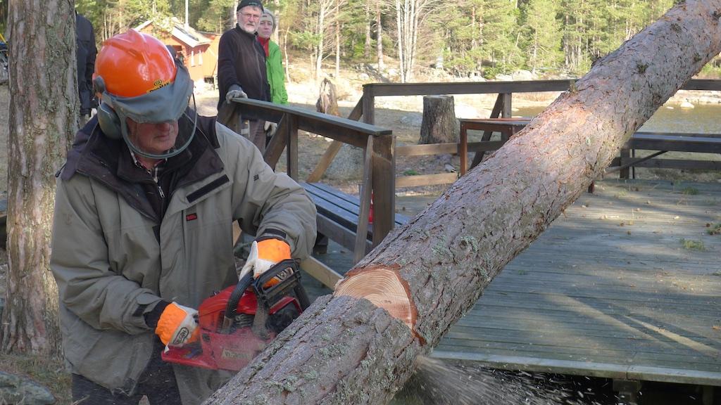 Trädfällning150315 6